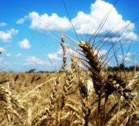 100-летний юбилей НИИ сельского хозяйства Юго-Востока