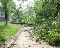 Итоги урагана в Саратове