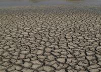 Жара грозит экологической катастрофой