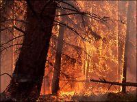 Введен режим ЧС по лесным пожарам