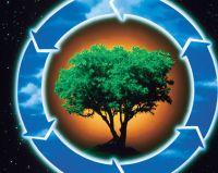 Выявлено нарушение природоохранного законодательства