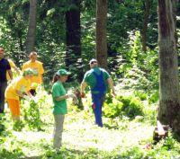 Учащиеся помогут лесничествам области восстановить дубравы